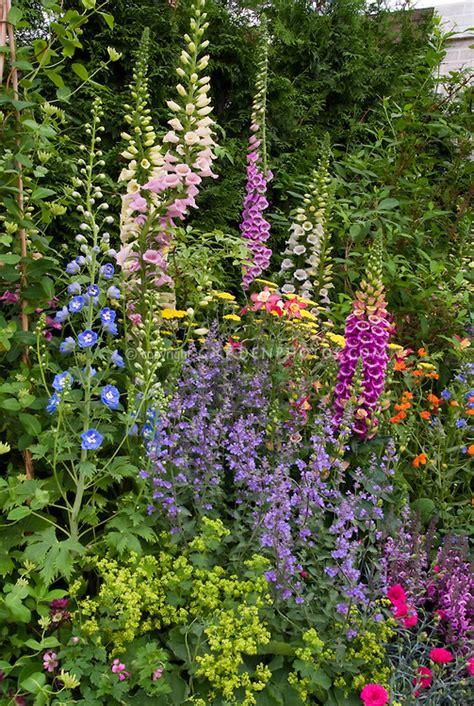garden flowers perennials perennial flower garden colorful plant flower stock