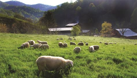 Resilient farming systems: How local foodsheds can brace for climate change   Mountain Xpress