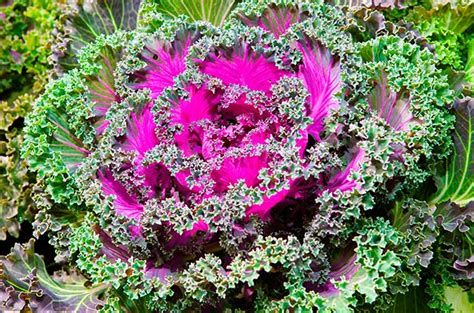 winter flower garden top 10 winter bloomers for your flower garden birds and
