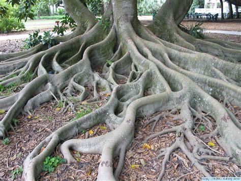 tree pic tree pics