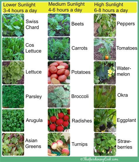 vegetable garden plants list shade tolerant vegetables vs sun friendly veggies the
