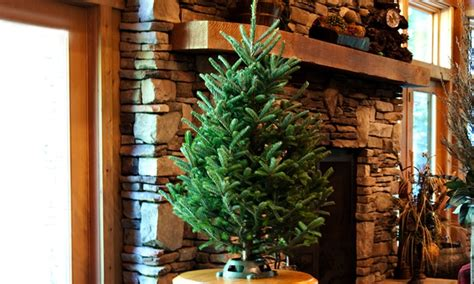 4 foot tree fresh cut 3 4 foot tree with stand groupon