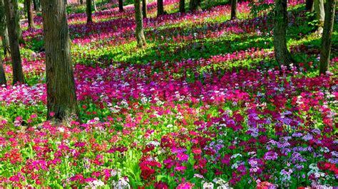 beautiful flower garden wallpaper beautiful garden flowers wallpapers pics gallery