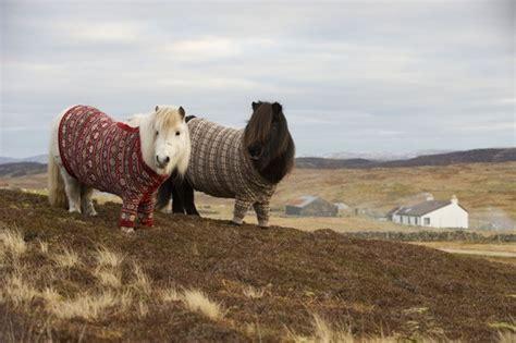 knitting tours scotland visitscotland s shetland ponies inspire new knitting tours