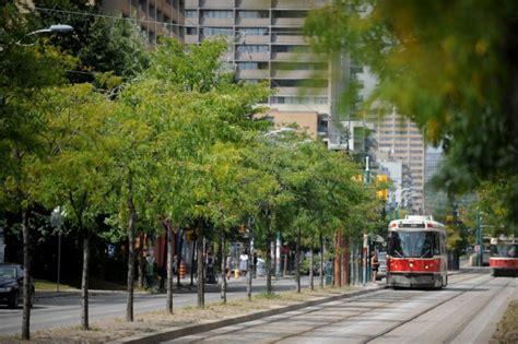 trees toronto tree lined streets not worth the cost arborists say