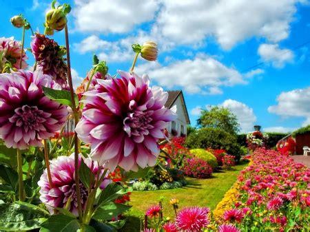beautiful flowers in garden beautiful clouds flowers garden image 485540 on