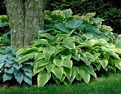 small plants that don t need sun 8 low maintenance outdoor plants for the busy gardener
