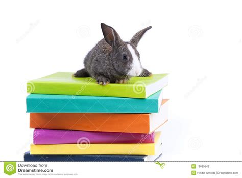 rabbits picture book rabbit reading books stock photo image of isolated
