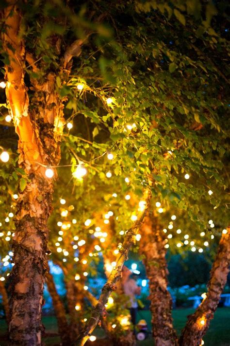tree twinkle lights image 449042 twinkle lights lights and lights in trees
