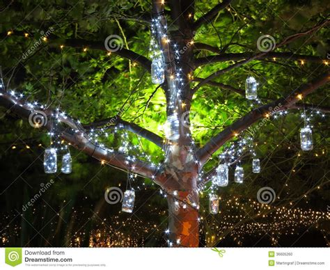 summer tree lights lights vintage in tree at stock photo