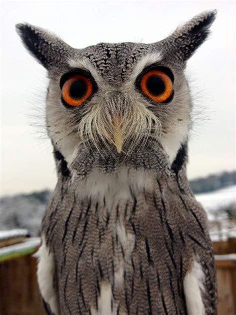 lwork owl barn owl ring bearer how it works