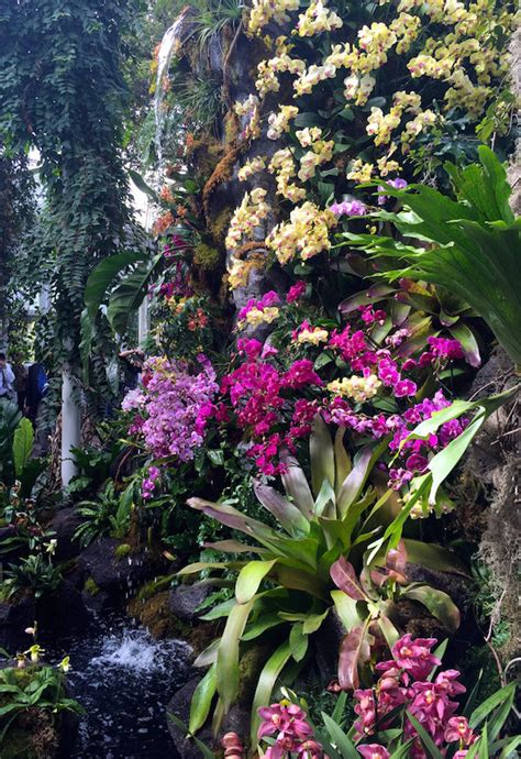 botanical gardens orchid show orchidelirium 2016 orchid show at the new york botanical