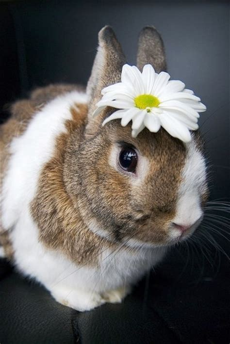 flower and bunny bunny rabbit flower crown animals