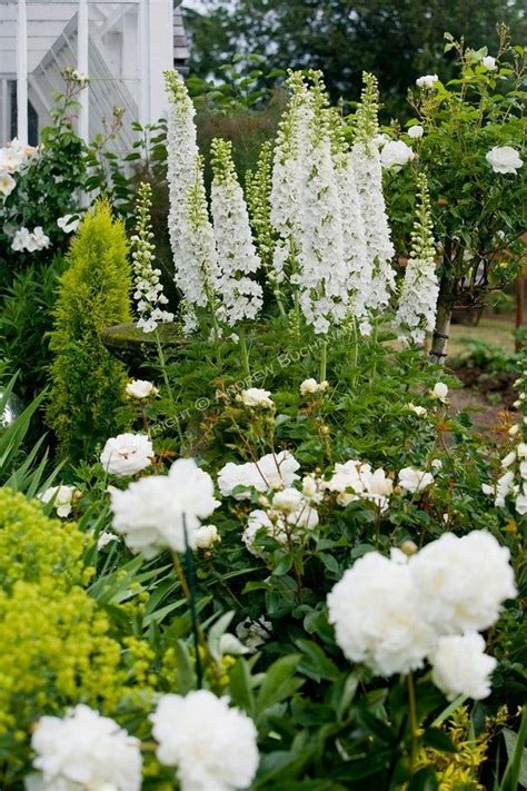 green garden flowers a vignette of white delphinium stalks peonies and roses
