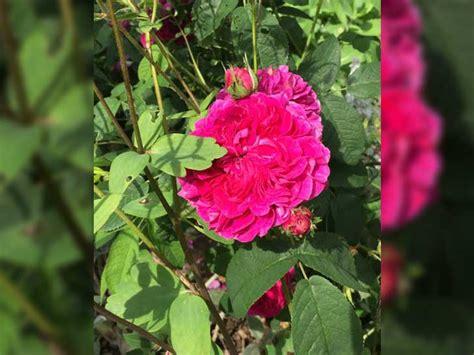 Der Persische Garten by Bundeskunsthalle Pr 228 Sentiert Persischen Garten