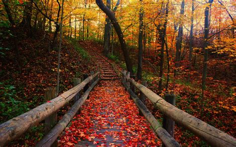 for fall autumn wallpapers hd