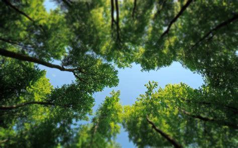 desk top tree trees desktop wallpapers free on latoro