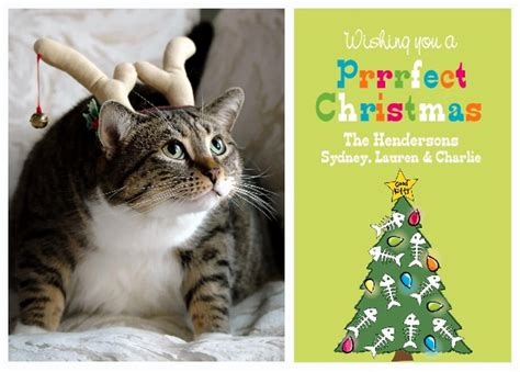 how to make a cat card 5 ideas for a greeting card starring your cat