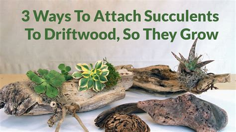 planters for succulents 100 planters for succulents diy driftwood planters