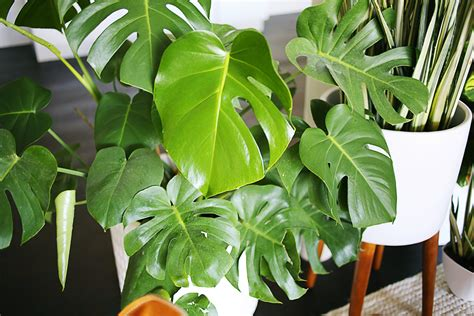 easy houseplants five easy to care for houseplants a beautiful mess