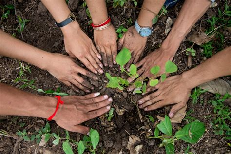 how to clean tree plant yet more trees in shah alam clean malaysia