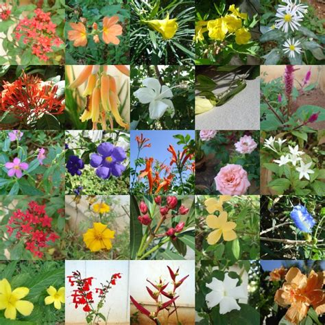 garden flower types flowers flower types