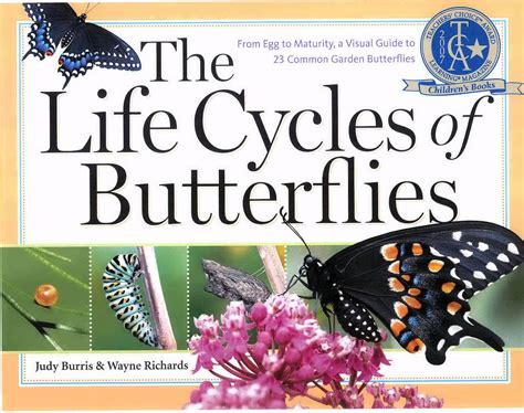 butterfly picture books book reviews