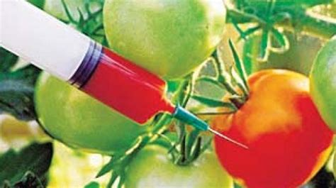 Genetically Modified Definition Crops by Genetically Modified Crops Need Detailed Evaluation Say