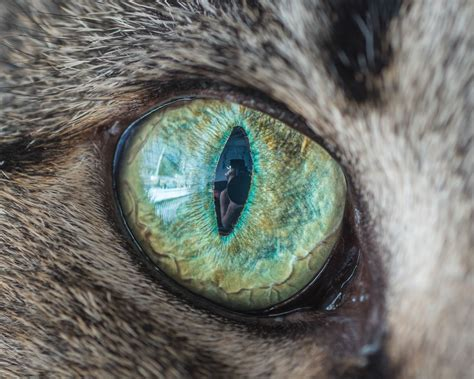 cat eye cat eye macro photos will hypnotize you
