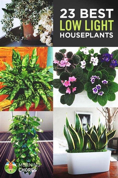 Plants Low Light 25 best ideas about low light plants on pinterest