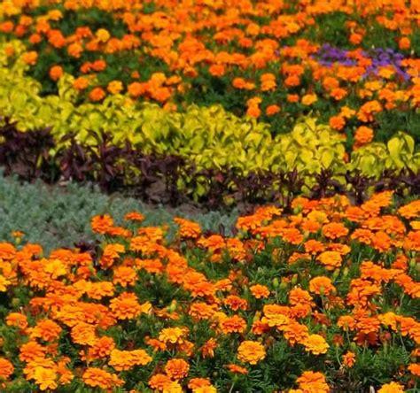 garden flower types garden types howstuffworks