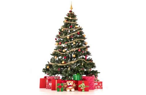 www christmastrees trees log un sticks firewood suppliers
