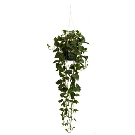 hanging plant nearly 44 in h green philodendron hanging basket