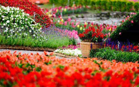 flower garden photos flower garden wallpapers best wallpapers