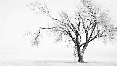 black and white tree black and white trees wallpaper hd desktop wallpapers