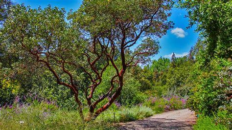 rancho santa botanic gardens rancho santa botanical garden california historic