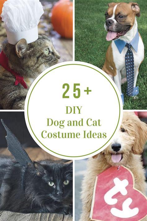 ideas cat costume diy and cat costume ideas the idea room