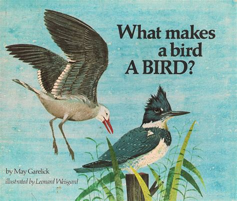 illustrated picture book the of children s picture books what makes a bird a