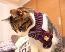 knitted cat scarf pattern neko muffler knitted cat scarf the green