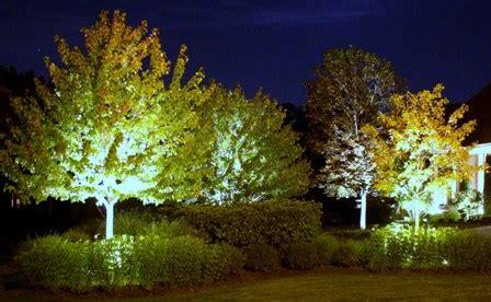 landscape lighting uplight trees moonlight and roses