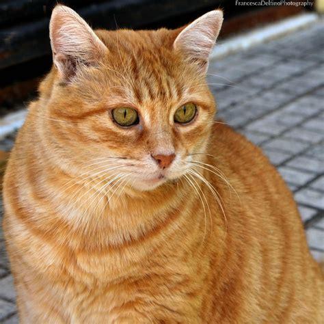 orange cat image gallery orangecat