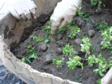 cria de caracoles en casa proyecto de caracoles youtube