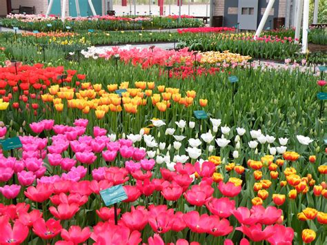most beautiful flower garden keukenhof holland s most beautiful flower garden