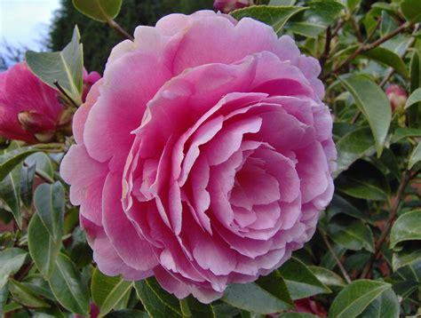 winter flower garden there is true design your landscape elements oregon