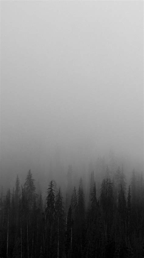 black and white black and white mist forests wallpaper iphone wallpapers