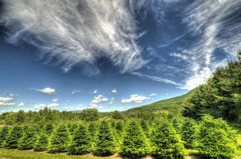 starting a tree farm tree farm open for business 28 images home www
