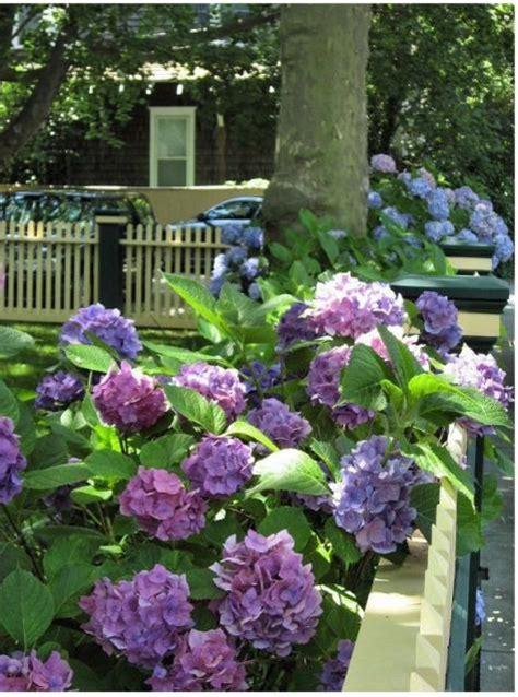 front yard flower garden pretty front yard garden flowers with of purple