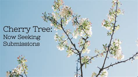187 cherry tree now seeking submissions