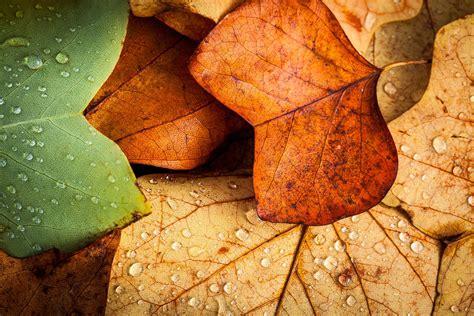 fondos escritorio oto o fondos oto 241 o wallpapers autumn fondos de pantalla de oto 241 o