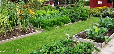 crop rotation home vegetable garden crop rotation planting plant succession by rotating